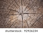 Slice Of Dry Wood Timber...