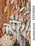 Fresh fish and seafood background lot of species - stock photo