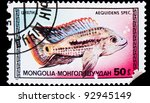 "Small photo of MONGOLIA - CIRCA 1987: A stamp printed MONGOLIA, showing fish cichlid, ""aequidens spec"" , circa 1987"