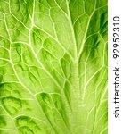 The Leaf Of Salad Close Up.
