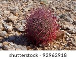 Close-up of cactus in desert of Nevada, USA - stock photo