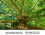 Tree Of Life  Amazing Banyan...