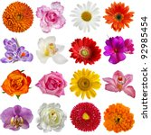 Collection Set Of  Flower Head...