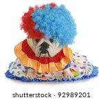 Silly Dog   English Bulldog...