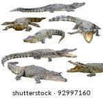 Collection of  crocodile...