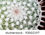 Macro Photography Of A Thorny...