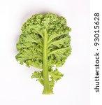 fresh kale | Shutterstock . vector #93015628