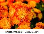 Orange Pot Marigold