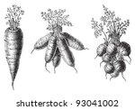 set of carrots   vegetable  ... | Shutterstock .eps vector #93041002