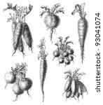 set of radish   vegetable  ... | Shutterstock .eps vector #93041074