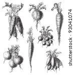 set of radish   vegetable  ... | Shutterstock .eps vector #93041074