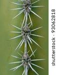 Detail Of Saguaro Cactus Closeup