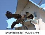 Purple Martins At Bird House...