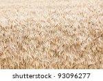 barley field full frame... | Shutterstock . vector #93096277