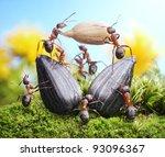 Team Of Ants Harvesting...