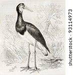 Small photo of Abdim's Stork old illustration (Ciconia abdimii). Created by Kretschmer and Schmid, published on Merveilles de la Nature, Bailliere et fils, Paris, ca. 1878