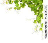 Collage Of Vine Leaves On Whit...