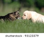 Stock photo cat and dog love friendship meeting acquaintance 93123379