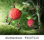 Team Of Ants Gathering Wild...