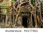 Giant Banyan  Tree Covering Th...
