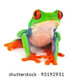 Red Eyed Treefrog Macro...