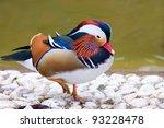 Closeup Male Mandarin Duck  Ai...