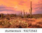 Sunset Lit Saguaros In Sonoran...