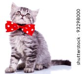 Stock photo young silver tabby cat looking up wearing a red ribbon on white background 93298000