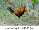 chicken | Shutterstock . vector #93311668