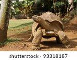 Stock photo tortoise from mauritius 93318187