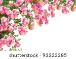 Rose Flowers Isolated On White...