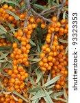 Orange  Sea Buckthorn With...