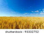 Golden Colorful Crop Meadow...
