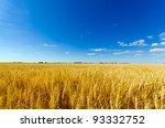Golden Colorful Crop Meadow...