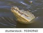 An American Crocodile Ready For ...
