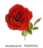 Stock photo red rose closeup isolated on white 93349432