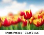 closeup red tulip flower on... | Shutterstock . vector #93351466
