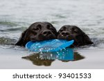 Stock photo labrador retriever puppy swim with frisbee 93401533