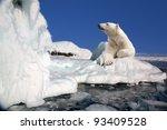 Small photo of polar bear standing on the ice block