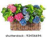 Colorful Hydrangea Bushes....