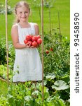 Vegetable garden - lovely gardener with harvests of ripe tomatoes - stock photo