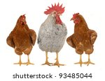 thoroughbred brown cock on a... | Shutterstock . vector #93485044