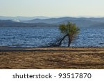 Lone Tree At Lake Folsom With...