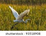 Great Egret In Flight. The...