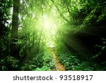 Small photo of way in jungle of Malaysia