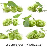 Hops Isolated On A White...