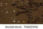 Small photo of Sand bubbler crab (Dotilla fenestrate) with their little sand balls