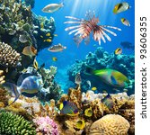 photo of a tropical fish on a... | Shutterstock . vector #93606355