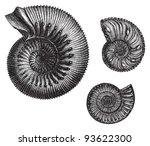 ammonites  jurastic fossil...   Shutterstock .eps vector #93622300