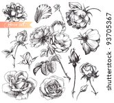 Stock vector flower set highly detailed hand drawn roses 93705367